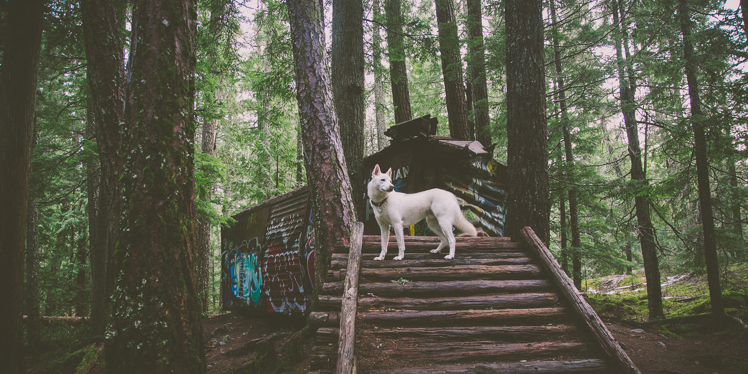 Top 5 Dog Friendly Hiking Trails in Whistler