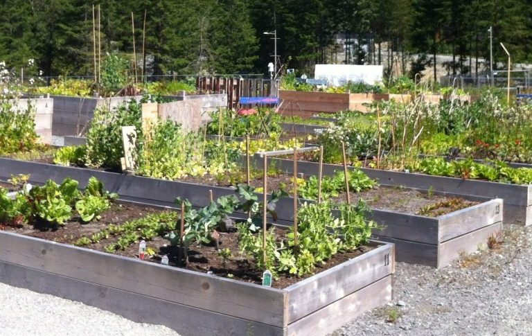 Cheakamus Community Garden