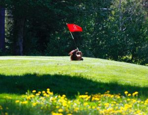 Golf Course Bear Cub