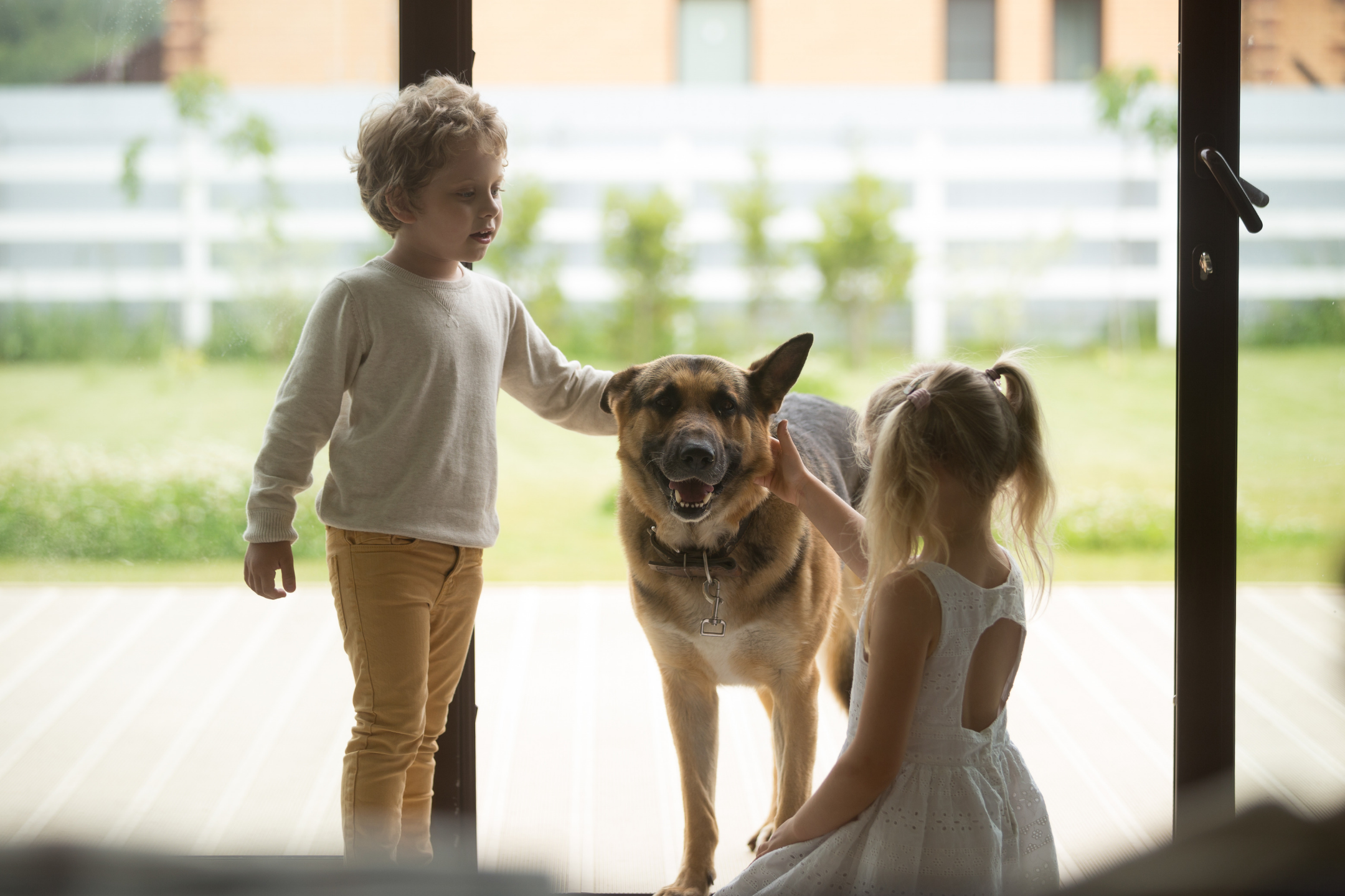 Finding the Perfect Home for Dog Owners