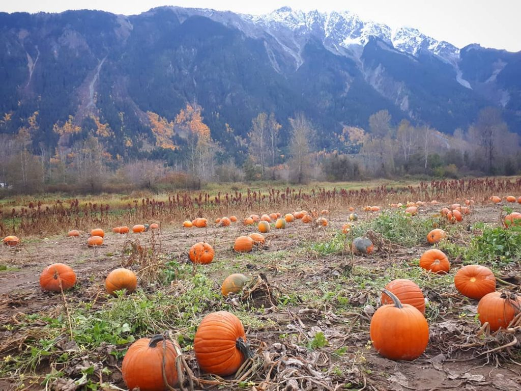 Pemberton Pumpkin Patch